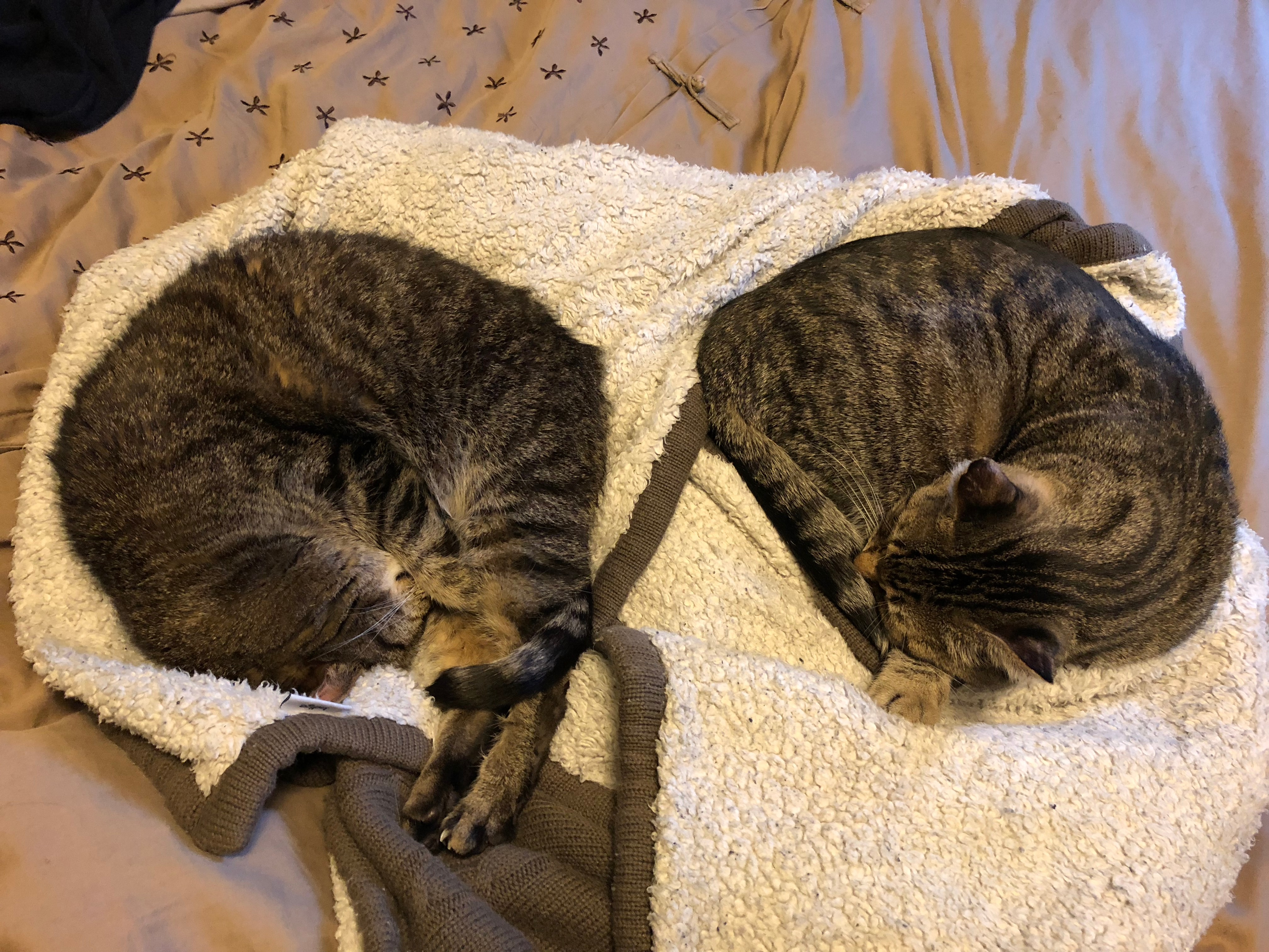 Cozy kitties