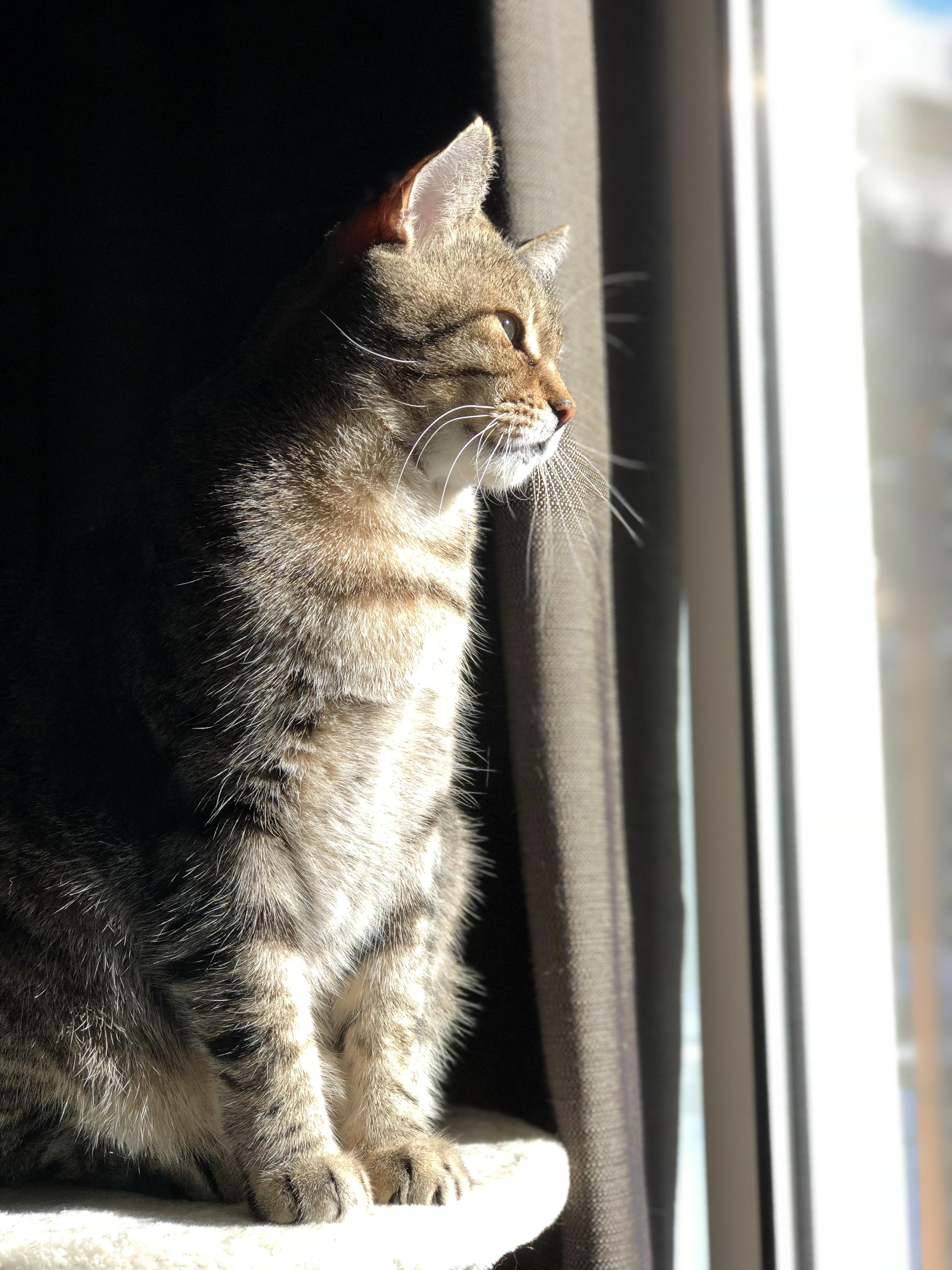 Gordon Greebo enjoying the sunshine - Josh Kern photography