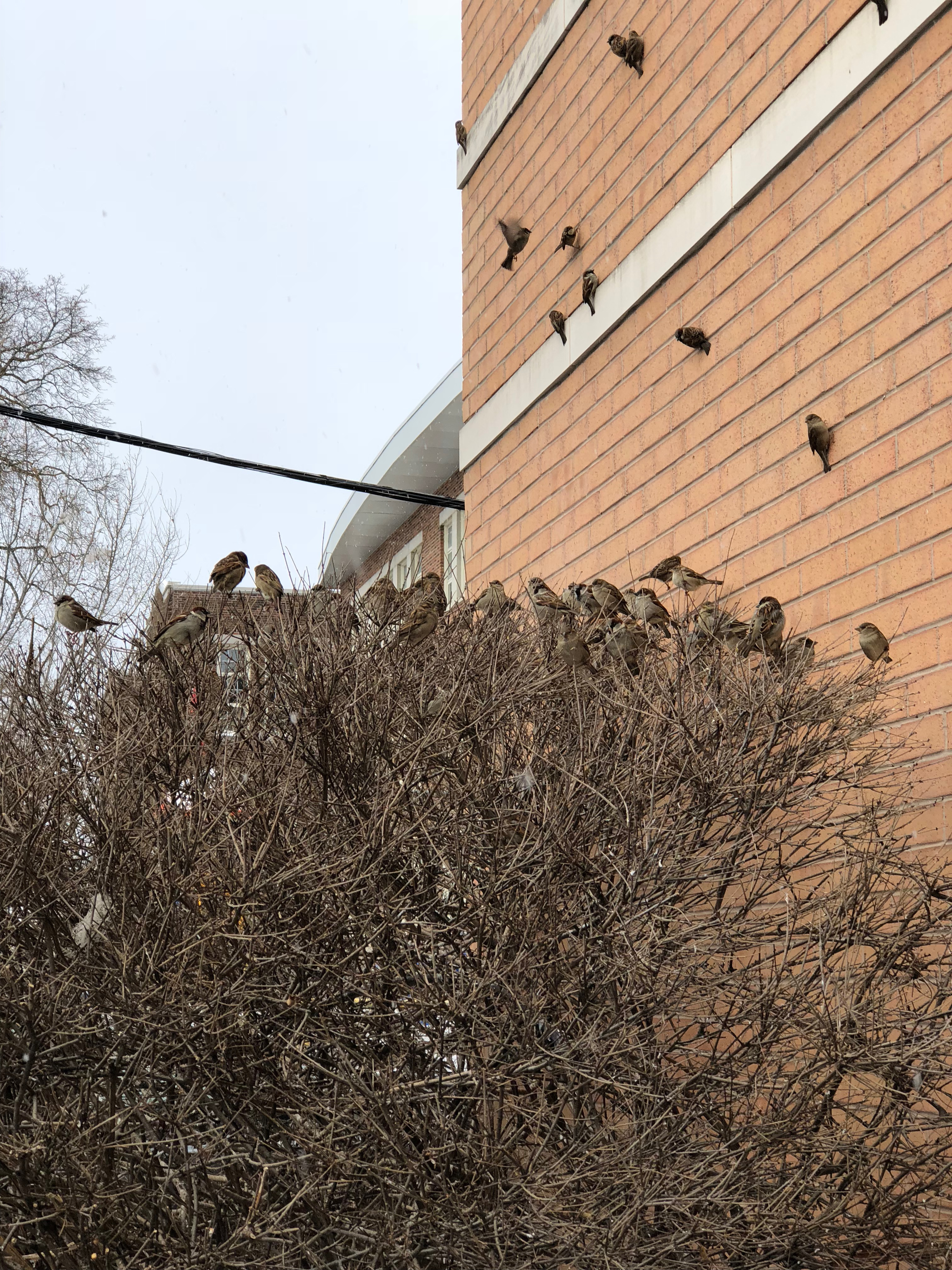 Birds sticking together in the cold - Josh Kern photography
